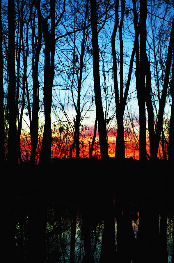 Bare Trees At Sunset 2 Photograph