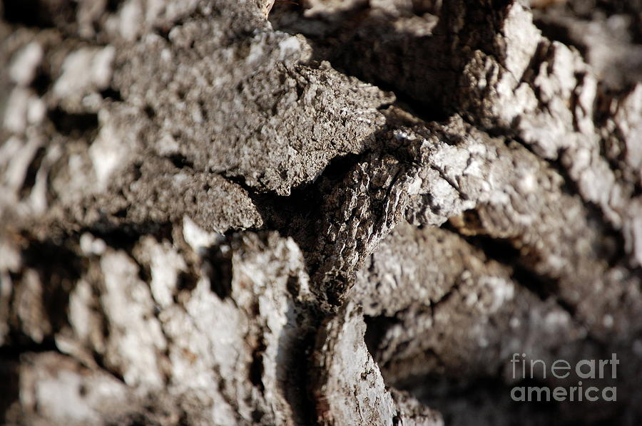Bark Stone Drought Photograph