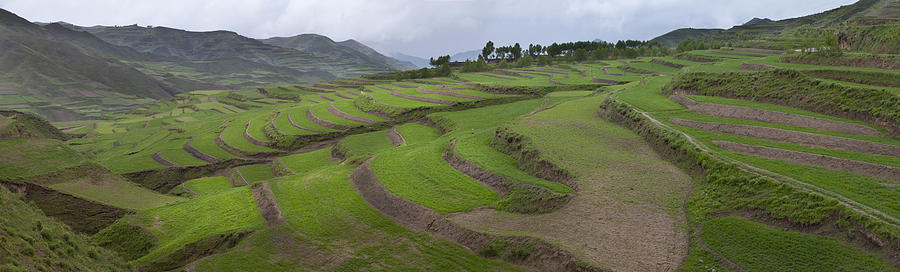 Barley Crop Grown On Terraced Hillsides Photograph