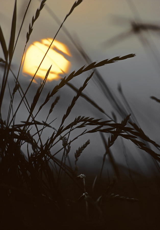 Barley Sunrise Photograph  - Barley Sunrise Fine Art Print