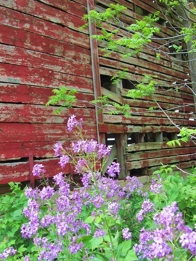 Barn-9 Photograph