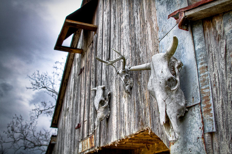 Cow Photograph - Barnstorm by Pixel Perfect by Michael Moore