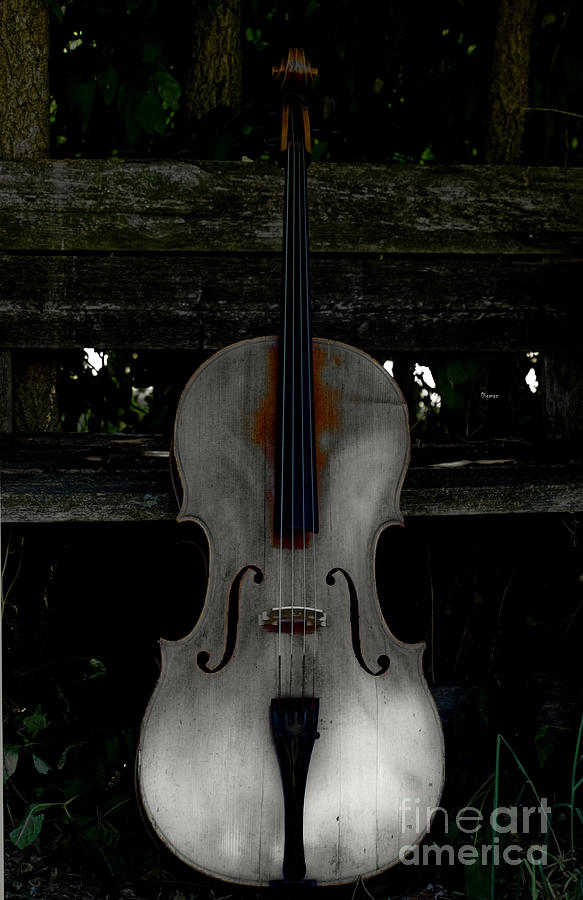 Barnyard Cello Photograph