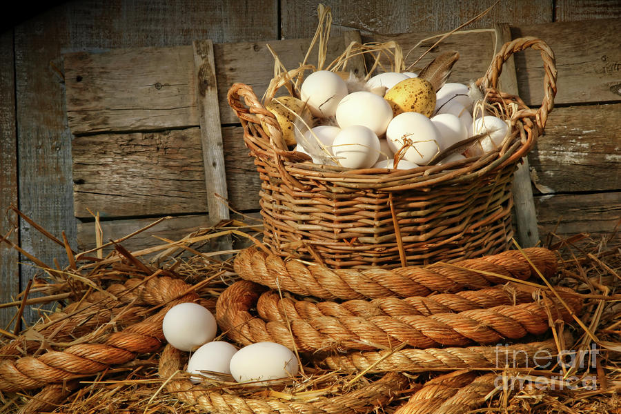 Basket Of Eggs On Straw Photograph