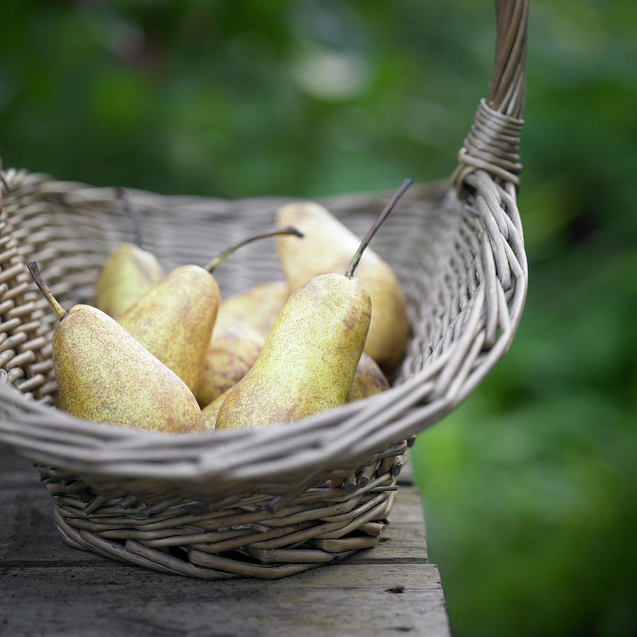 Basket Of Freshly Picked Pears. Photograph