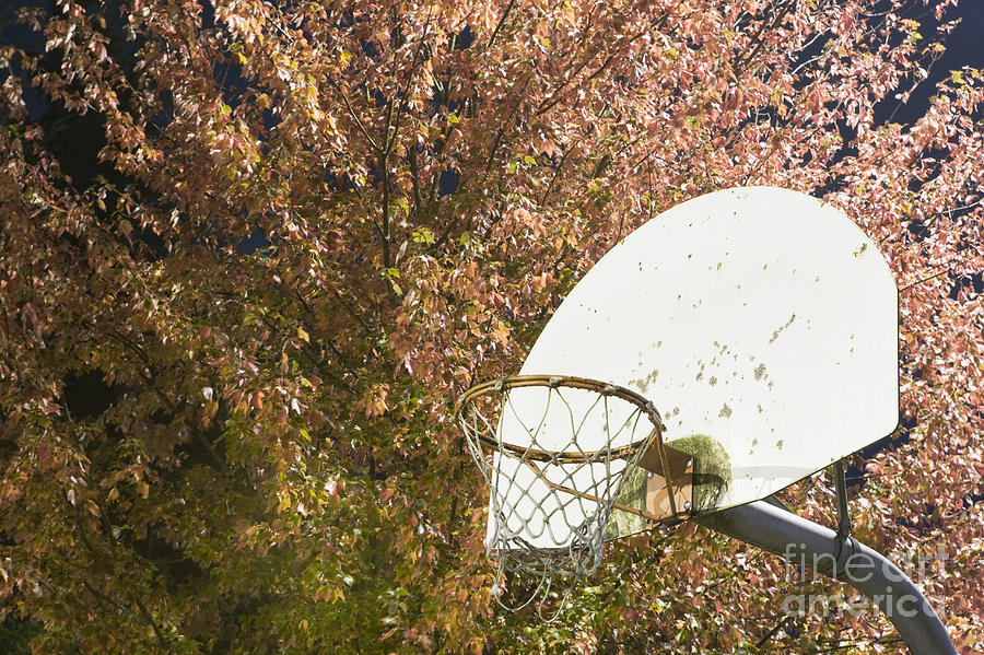 Basketball Hoop Photograph  - Basketball Hoop Fine Art Print
