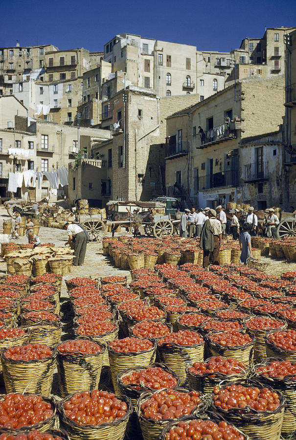 Baskets Filled With Tomatoes Stand Photograph  - Baskets Filled With Tomatoes Stand Fine Art Print