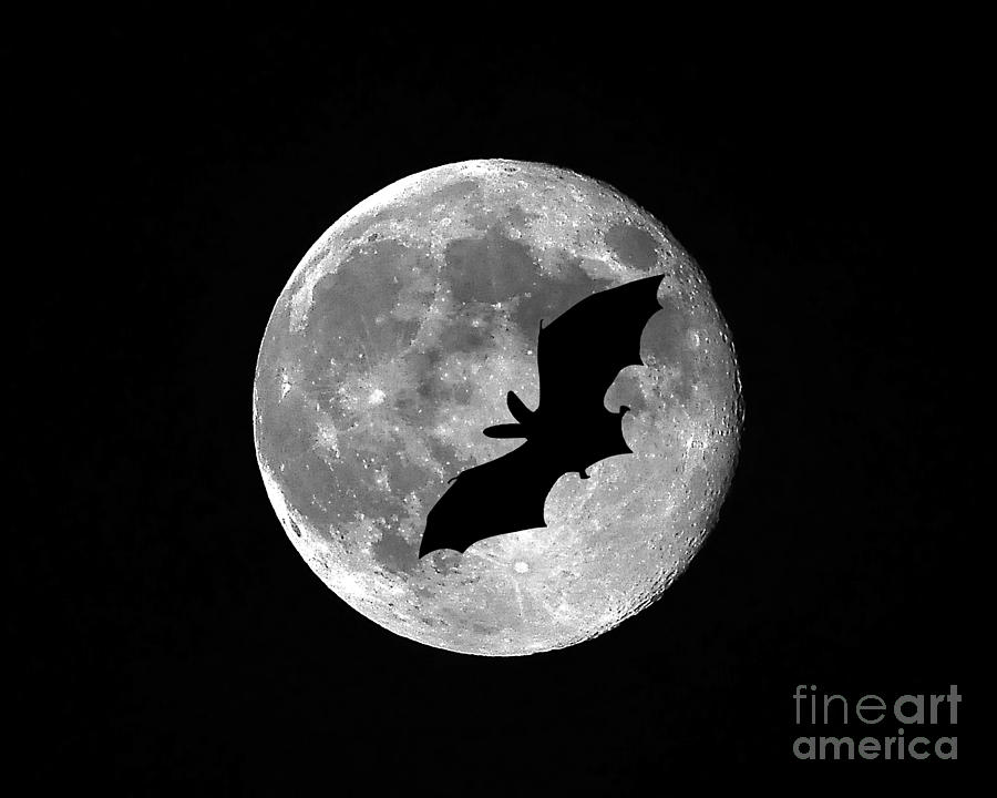 Bat Moon Photograph
