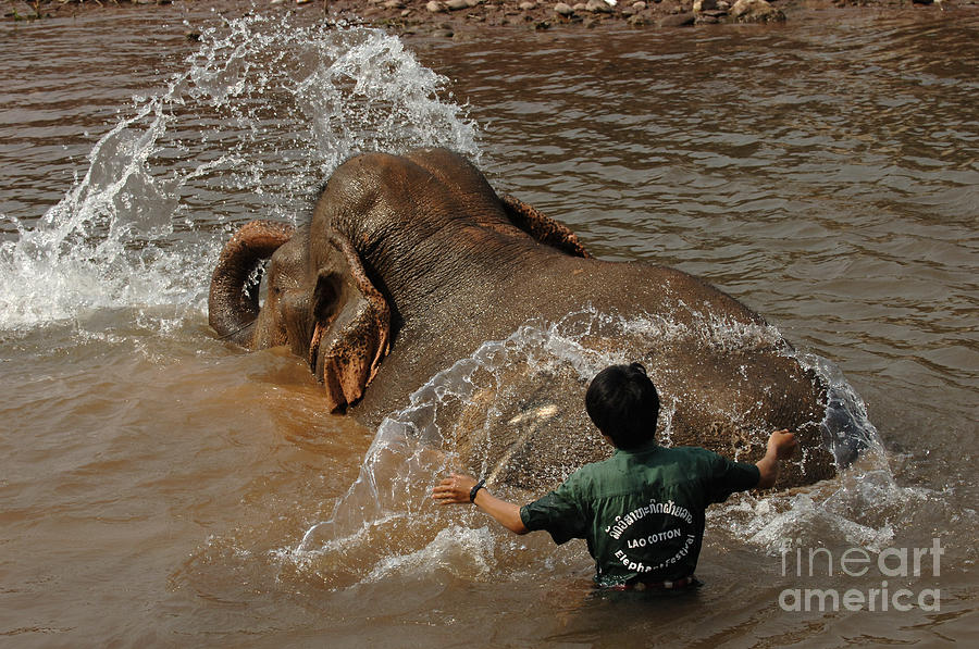 Reverse Photograph - Bath Time In Laos by Bob Christopher