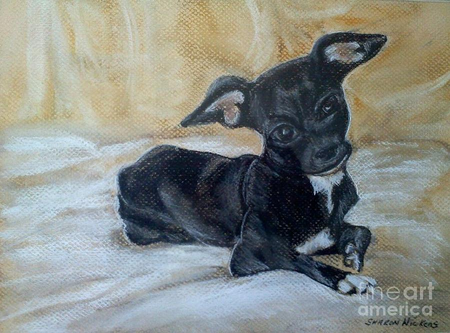 Dog Portrait Pastel - Batman by Sharon Wilkens