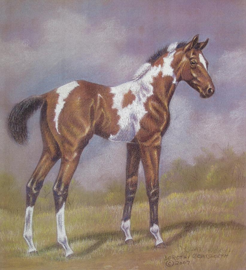 Bay Paint Foal Pastel  - Bay Paint Foal Fine Art Print
