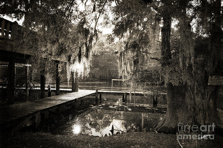Bayou Evening Photograph  - Bayou Evening Fine Art Print