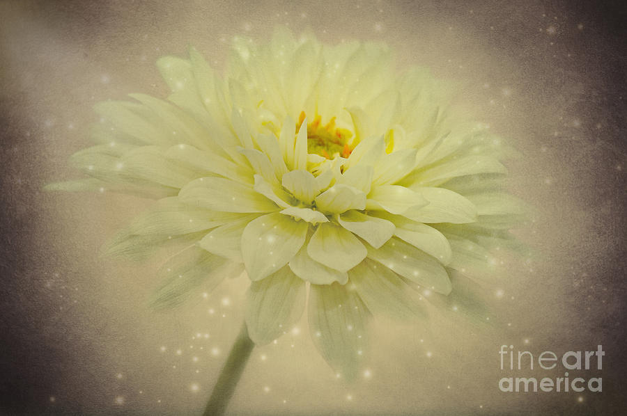 Be A Star Photograph  - Be A Star Fine Art Print
