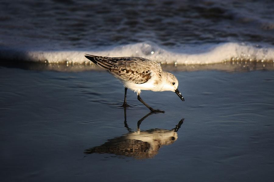Beach Bird Photograph