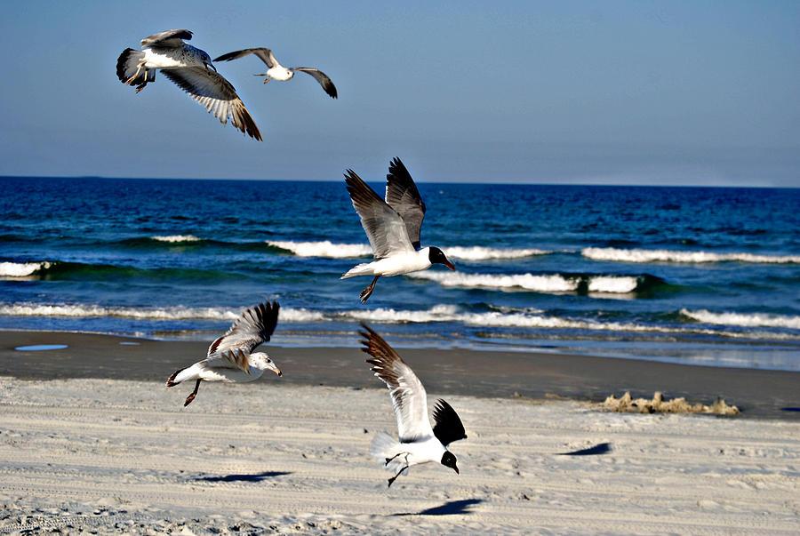 Beach Birds In Play Photograph