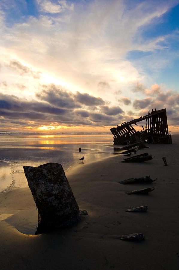 Beach Bones Photograph