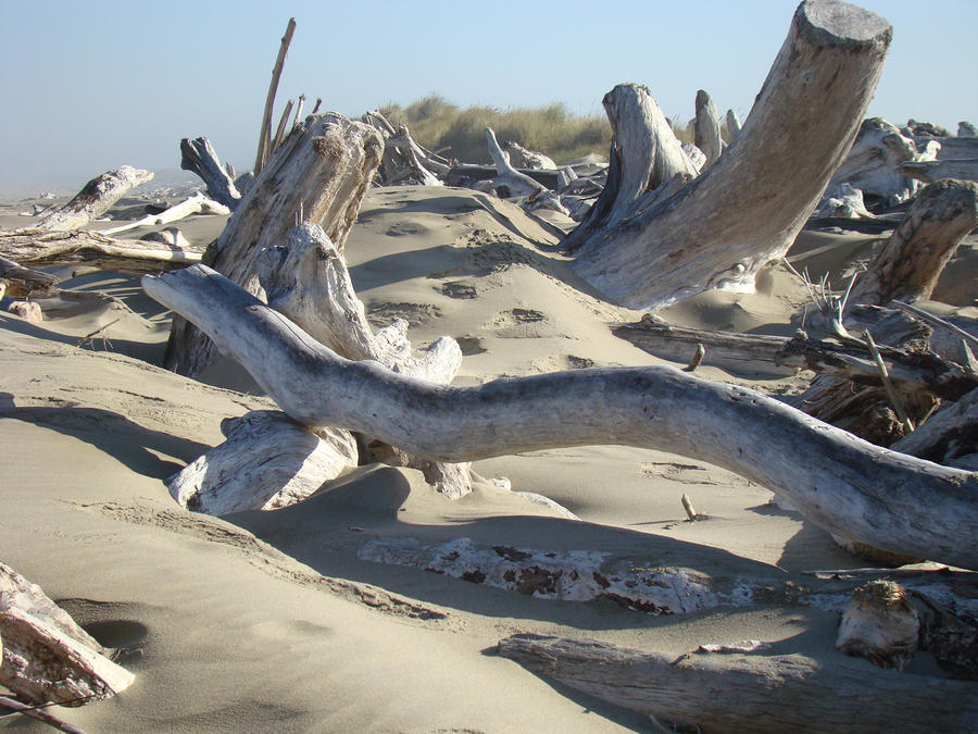 Beach Driftwood Art Prints Coastal Sand Dunes Shore Photograph