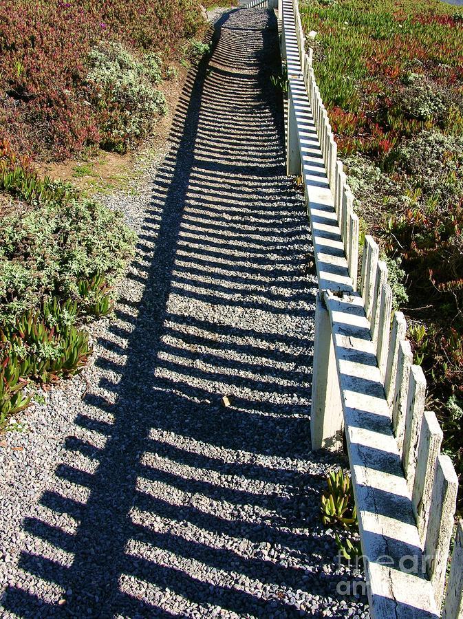Beach Path Photograph