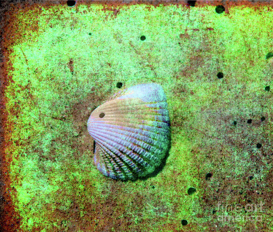 Beach Treasure Photograph  - Beach Treasure Fine Art Print