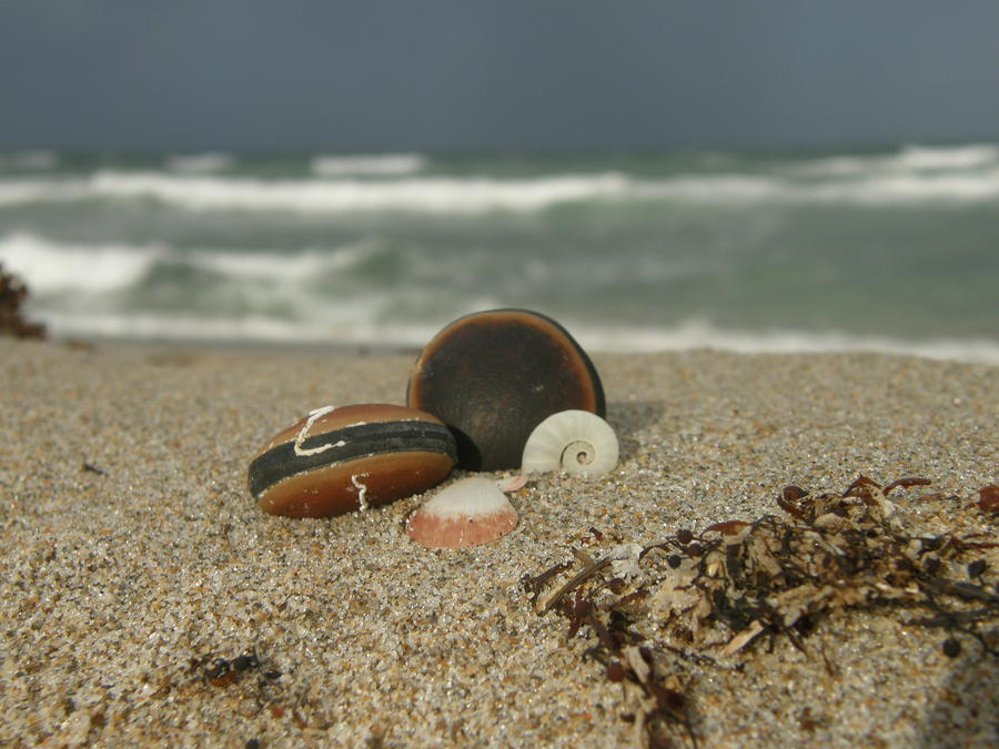 Beach Treasures 1 Photograph