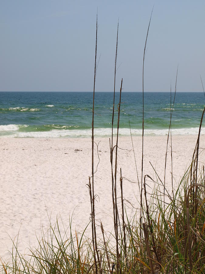 Beach View With Grass Photograph