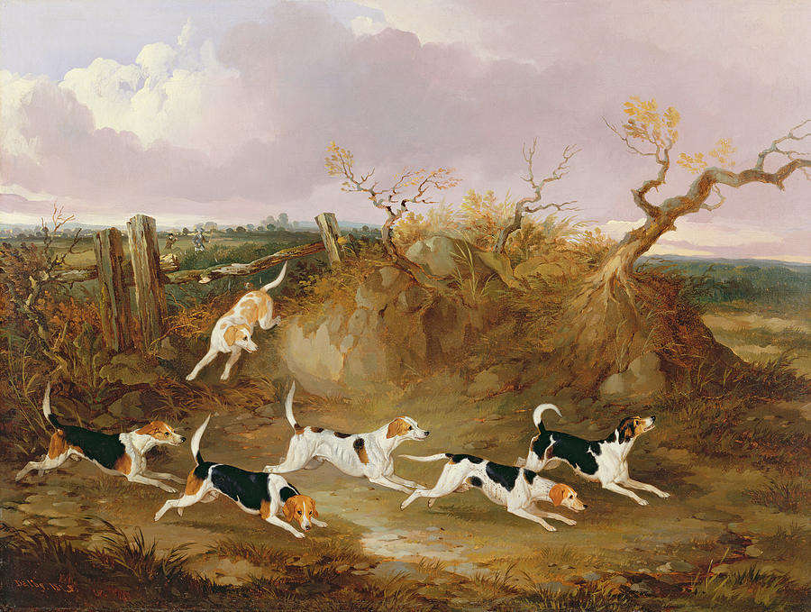 Beagles In Full Cry Painting