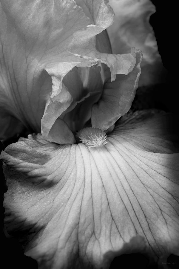 Bearded Iris Flower Black And White Photograph