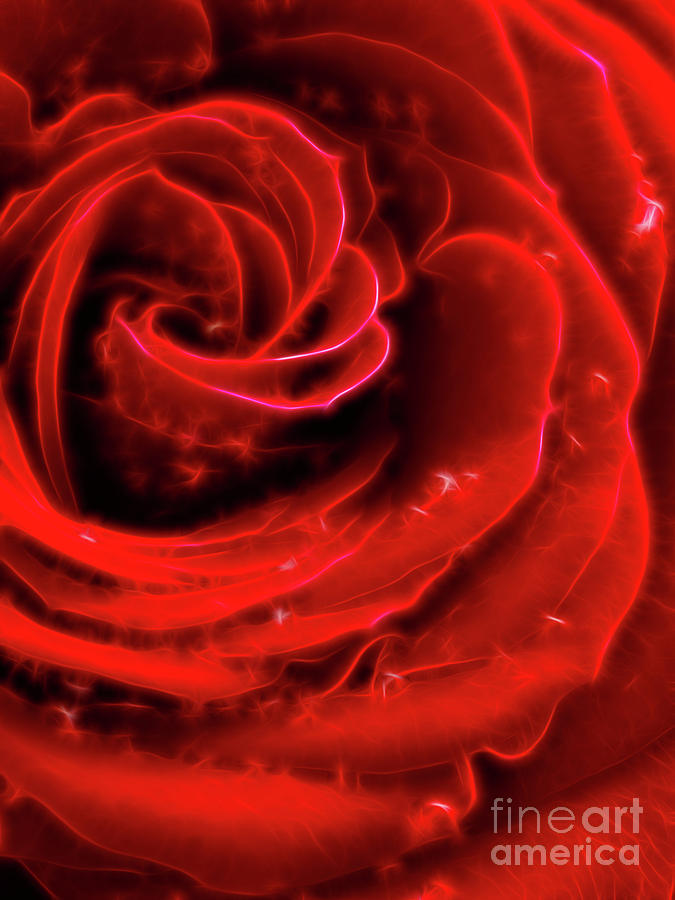 Beautiful Abstract Red Rose Photograph