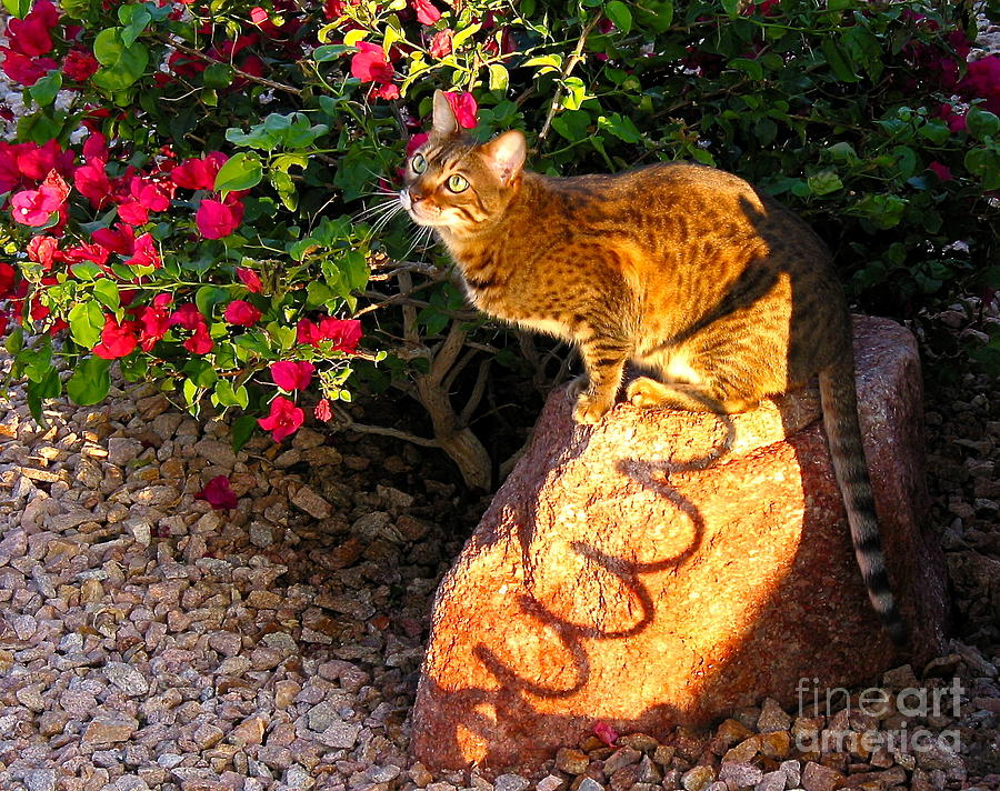 Beautiful Bengal Cat Painting