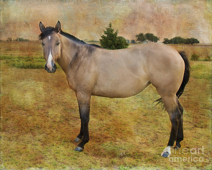 Beautiful Buckskin Photograph  - Beautiful Buckskin Fine Art Print