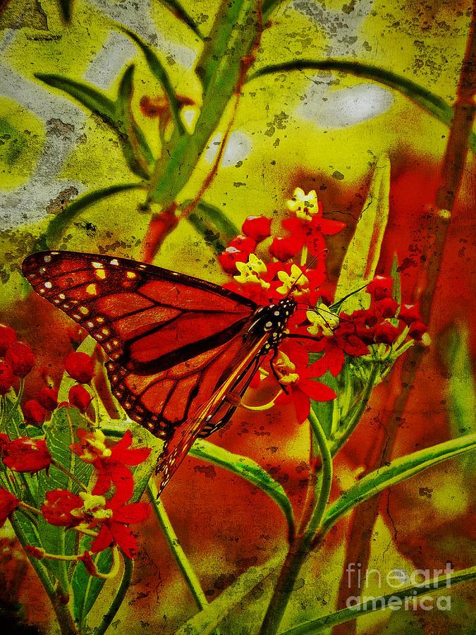 Butterflies at EnchantedLearningcom