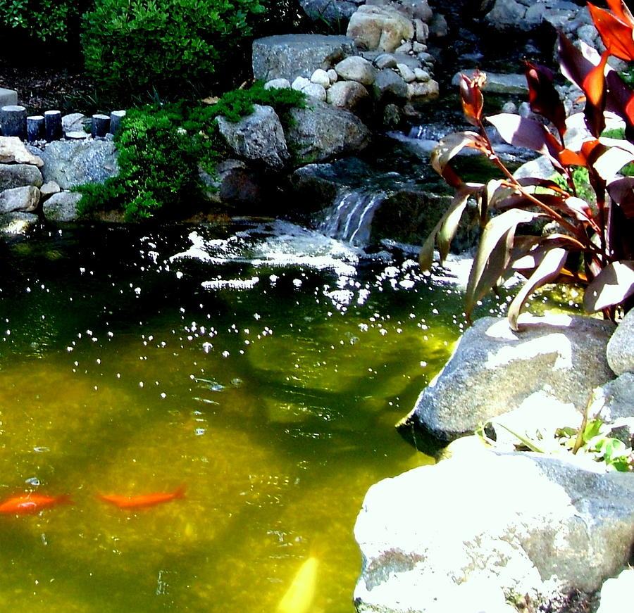 Beautiful coy pond by deborah yeager for Coy ponds pictures