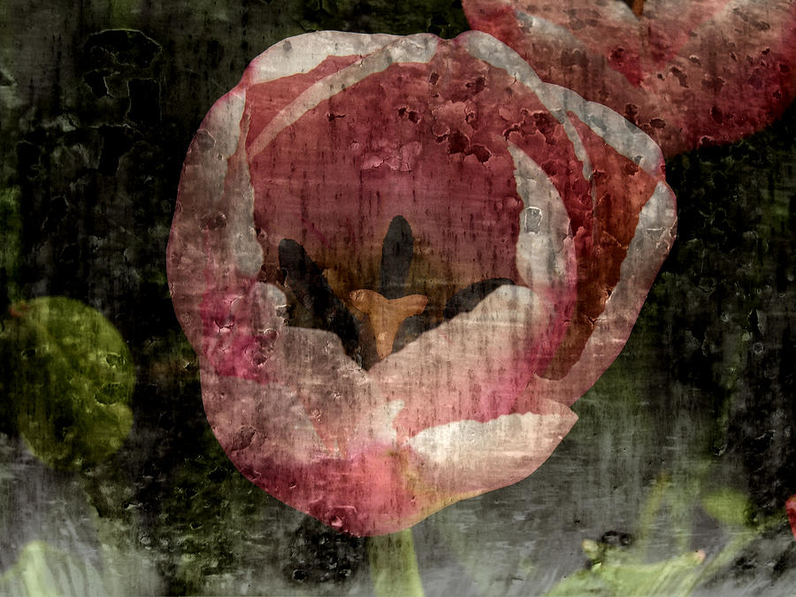 Beautiful Decay Photograph  - Beautiful Decay Fine Art Print