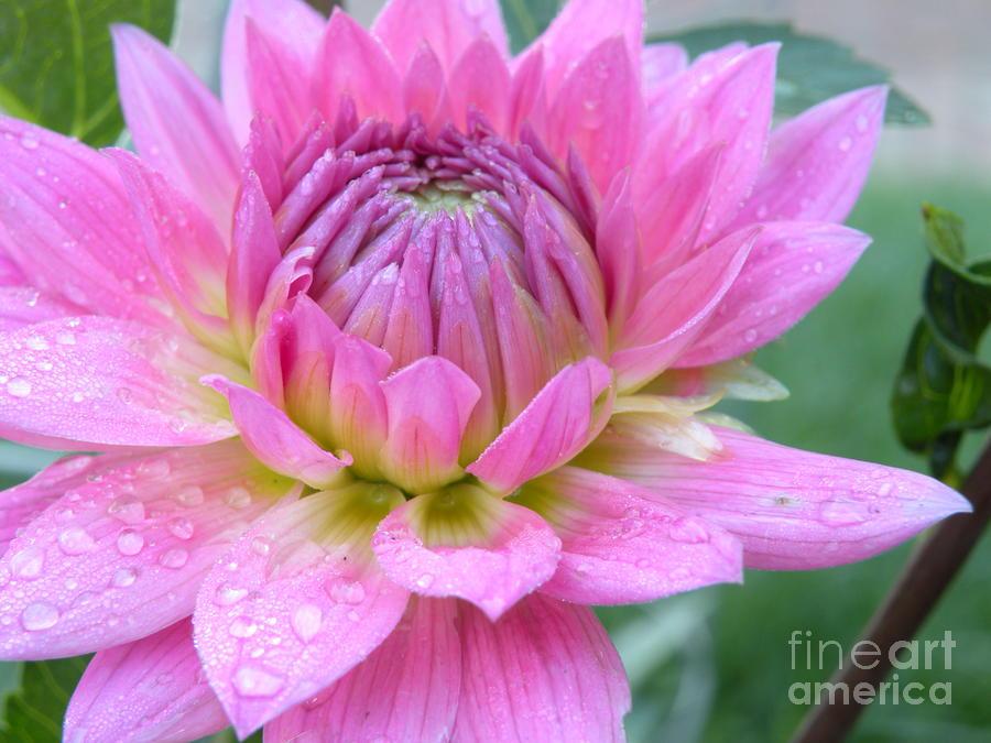 Beautiful Flower In Daybreak Photograph