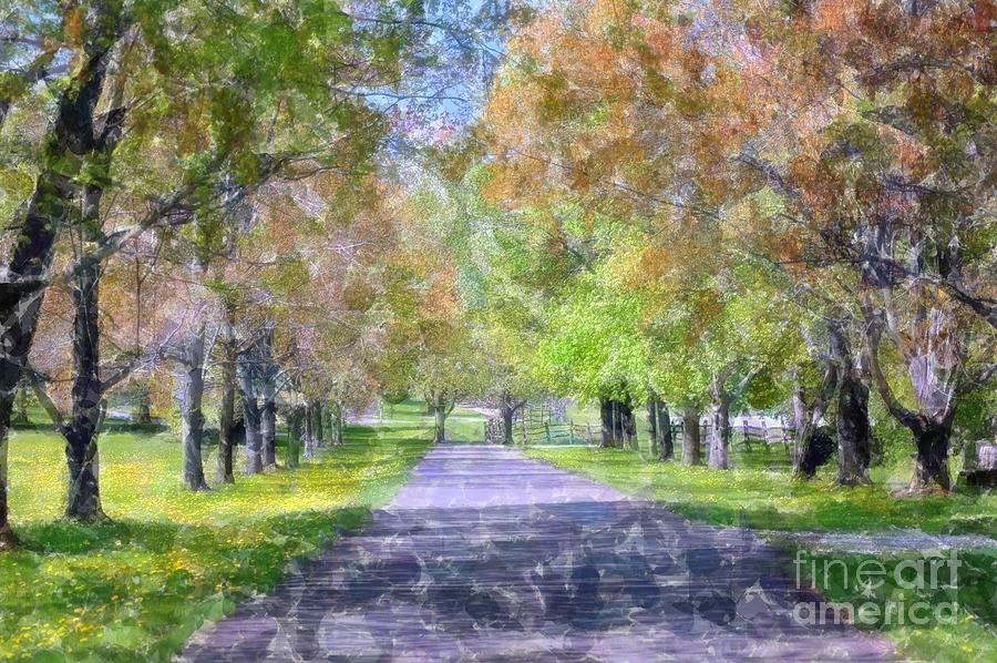 Beautiful Pathway Photograph  - Beautiful Pathway Fine Art Print