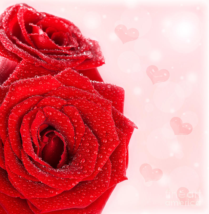 Beautiful red roses border with hearts photograph