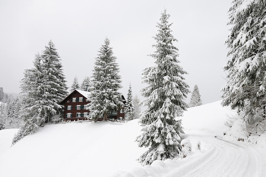 Beautiful Winter Landscape With Trees And House Photograph