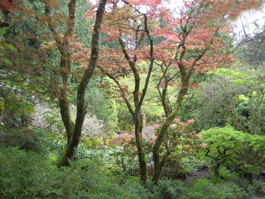 Beauty Among The Trees Photograph