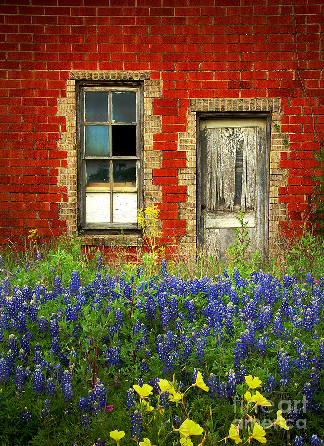 Beauty And The Door - Texas Bluebonnets Wildflowers Landscape Door Flowers Photograph  - Beauty And The Door - Texas Bluebonnets Wildflowers Landscape Door Flowers Fine Art Print