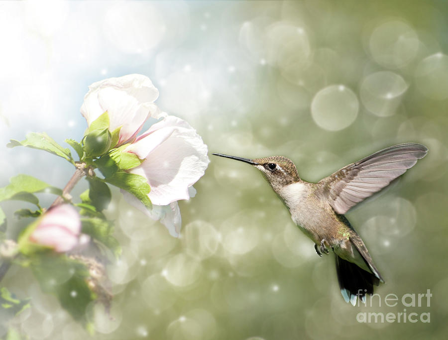 Althea Photograph - Beauty In Flight by Sari ONeal