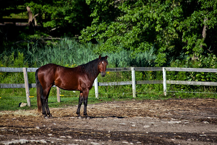 Horse Photograph - Beauty Of A Horse by Karol Livote