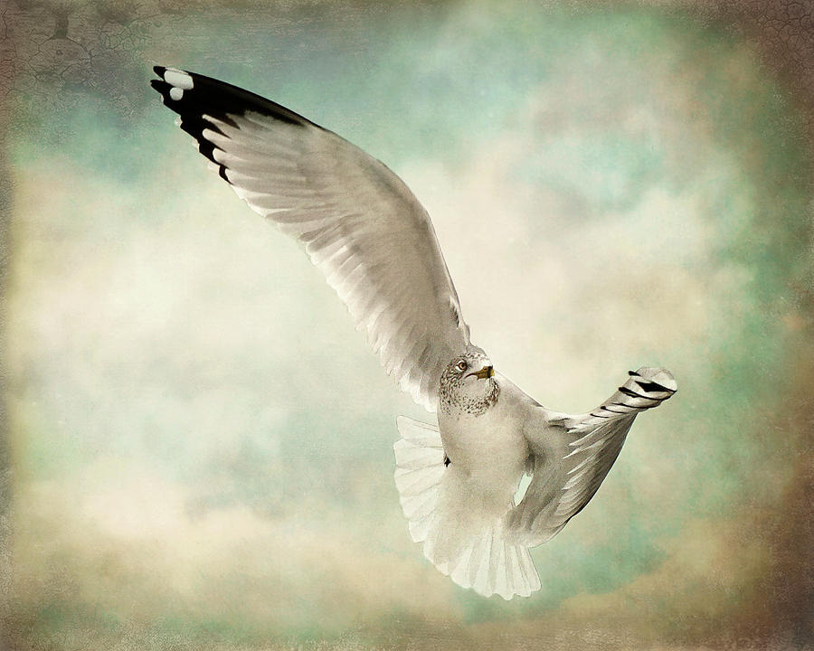 Horizontal Photograph - Beauty Of Flight by Jody Trappe Photography