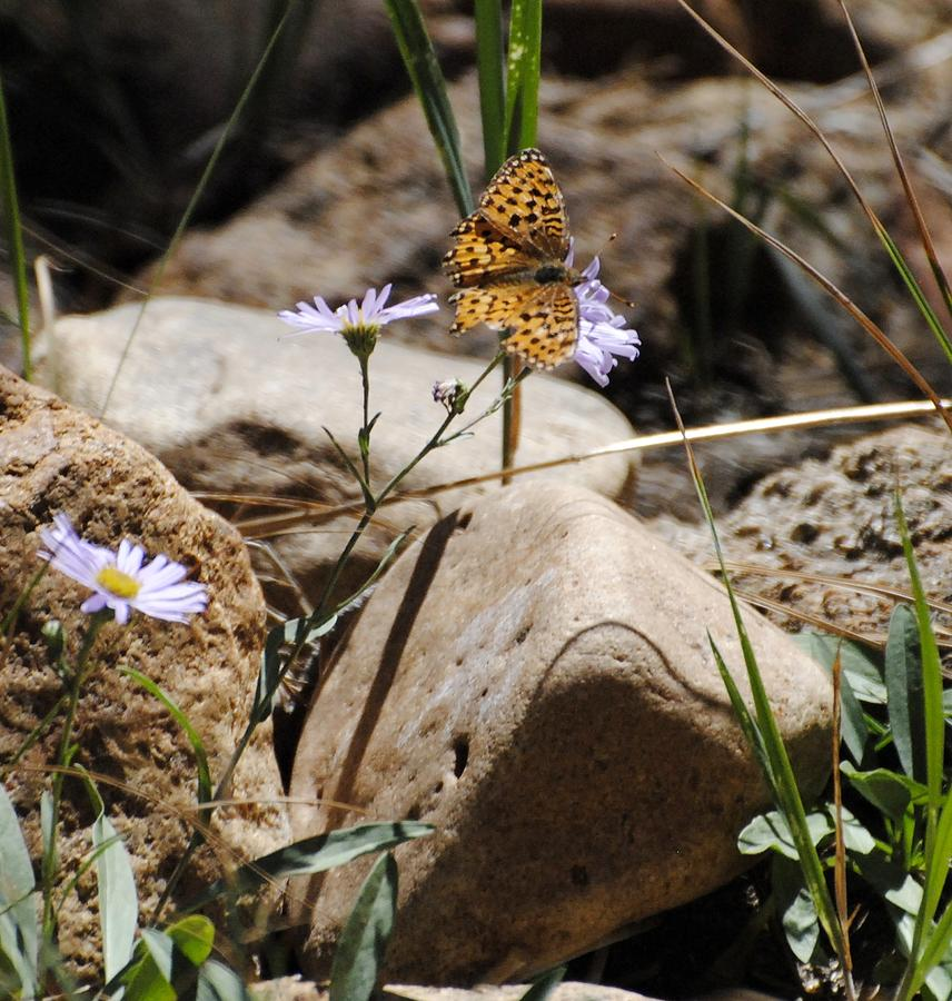 Butterfly Photograph - Beauty On The Rocks by Meagan Suedkamp