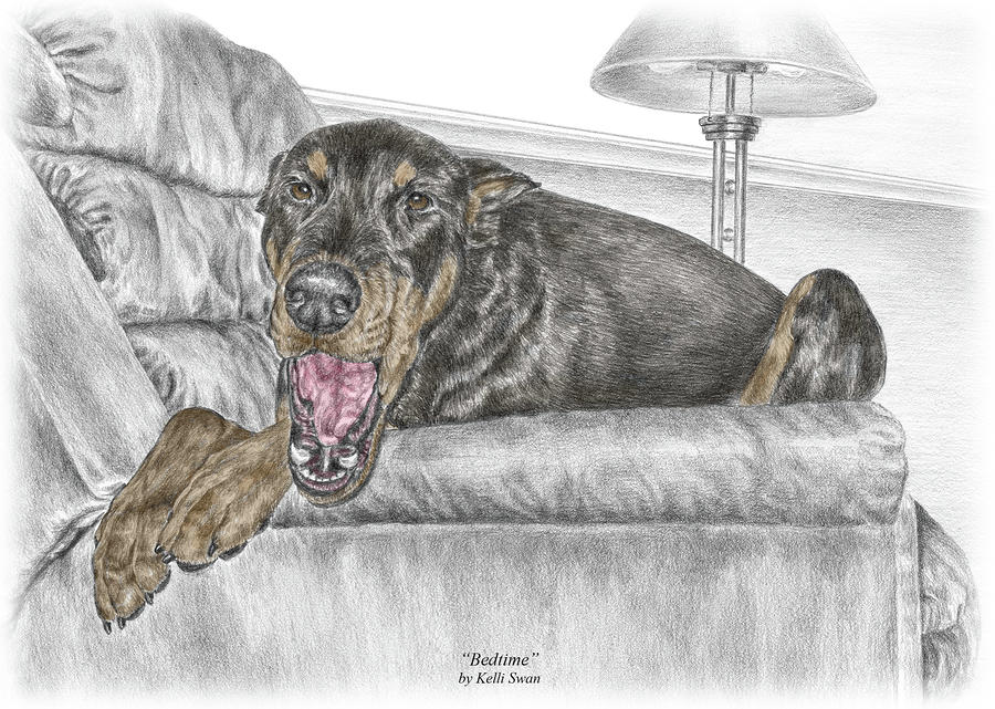Bedtime - Doberman Pinscher Dog Print Color Tinted Drawing  - Bedtime - Doberman Pinscher Dog Print Color Tinted Fine Art Print