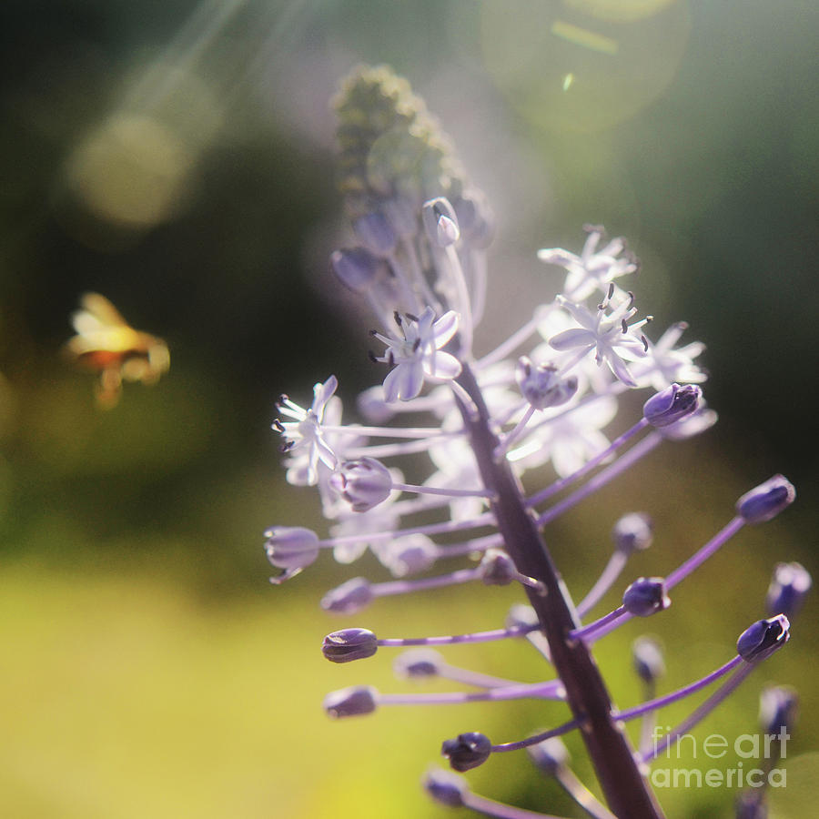 Bee And Flower Photograph