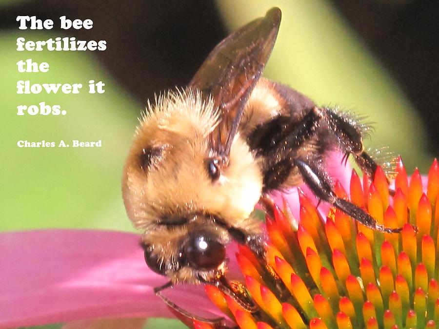 Bee Exchange Photograph
