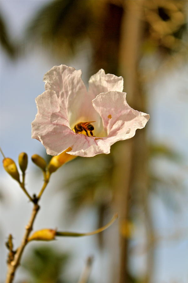 Bee In Paradise Photograph  - Bee In Paradise Fine Art Print
