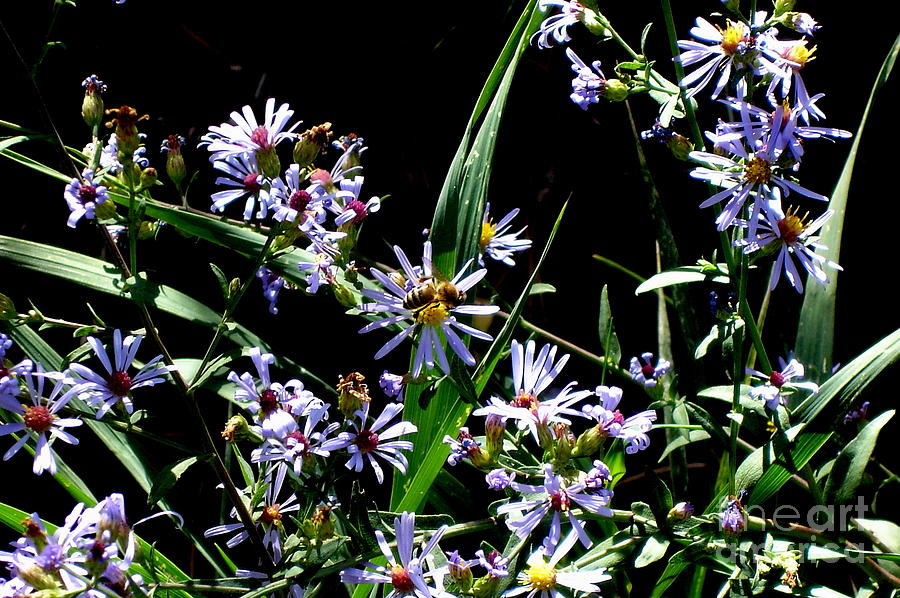 Bee-utiful Photograph  - Bee-utiful Fine Art Print