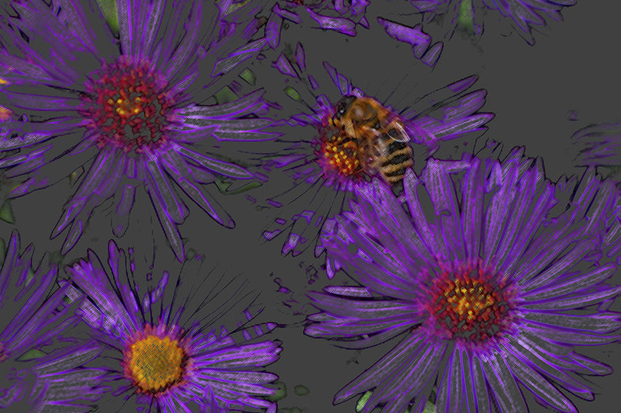 Bee With Asters On Gray Photograph  - Bee With Asters On Gray Fine Art Print