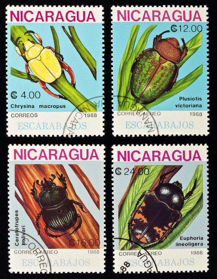 Beetles Stamps Collection. Photograph